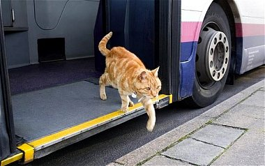 Click image for larger version  Name:CatBus.jpg Views:15 Size:60.3 KB ID:172931