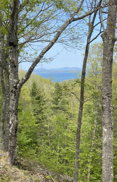 view from a bike ride on an Acadia NP carriage road